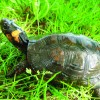 Bog turtle crises averted, ID for immigrants discussed at Lehigh Twp. meeting